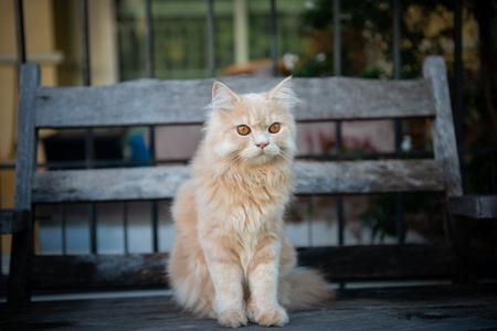 Cute yellow cat sitting on the wooden chair Standard-Bild - 118979968