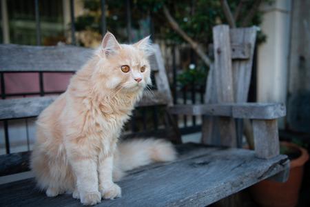 Cute yellow cat sitting on the wooden chair Standard-Bild - 118980295