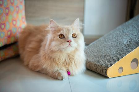 Orange cute cat is laying on the floor Standard-Bild - 118982039