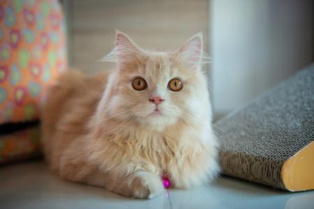 Orange cute cat is laying on the floor Standard-Bild - 118982040