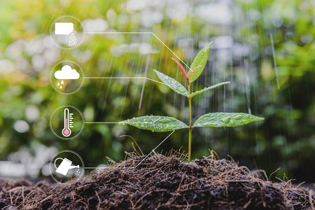 Young growing plant with icon of watering shower, fertiliser, thermometer and raincloud for planting technology concept Stock Photo