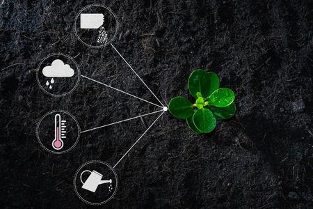 Plano de planta joven en crecimiento con icono de ducha de riego, fertilizante, termómetro y nube de lluvia para el concepto de tecnología de siembra Foto de archivo