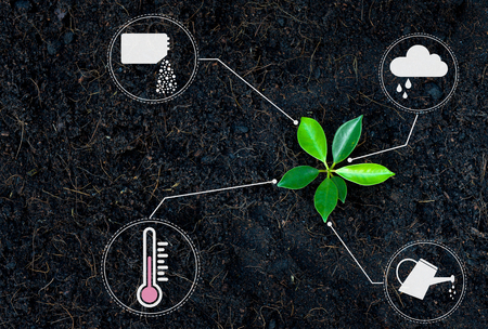 Flat lay of young growing plant with icon of watering shower, fertiliser, thermometer and raincloud for planting technology concept 版權商用圖片