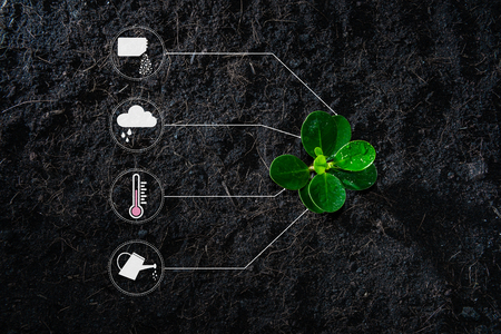 Flat lay of young growing plant with icon of watering shower, fertiliser, thermometer and raincloud for planting technology concept Banco de Imagens