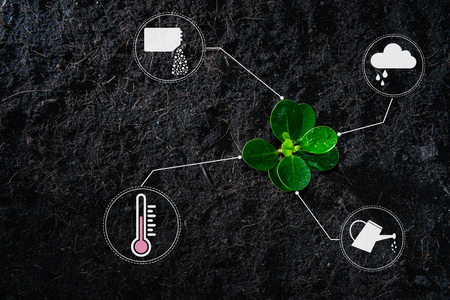 Flat lay of young growing plant with icon of watering shower, fertiliser, thermometer and raincloud for planting technology concept Imagens