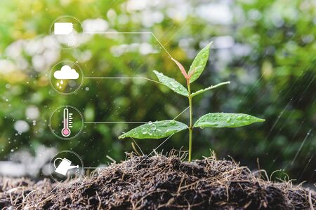 Young growing plant with icon of watering shower, fertiliser, thermometer and raincloud for planting technology concept