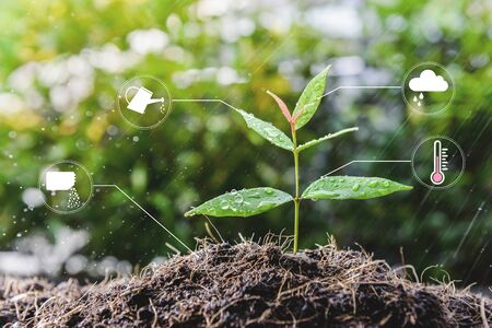 Young growing plant with icon of watering shower, fertiliser, thermometer and raincloud for planting technology concept Reklamní fotografie