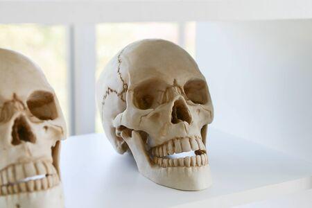 Close up human skull model placed on a hospital shelf
