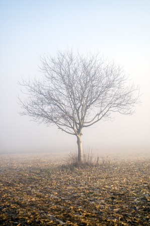 recluse: Photographed in the early morning in dense fog next to one of local roads in Bosnia and Herzegovina. Stock Photo