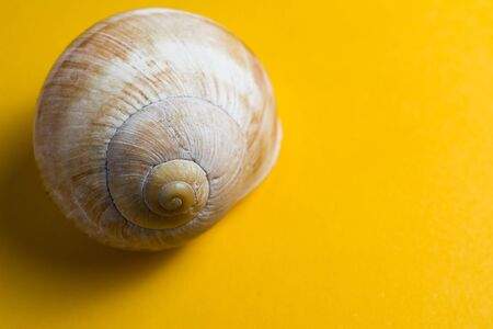 Empty snail shells on a yellow background.