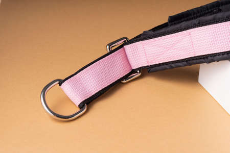 selective focus, soft everyday collar for large dogs, color. with metal mounting rings
