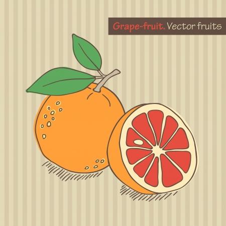 hand drawn grapefruit on striped background Stock Photo - 15135065