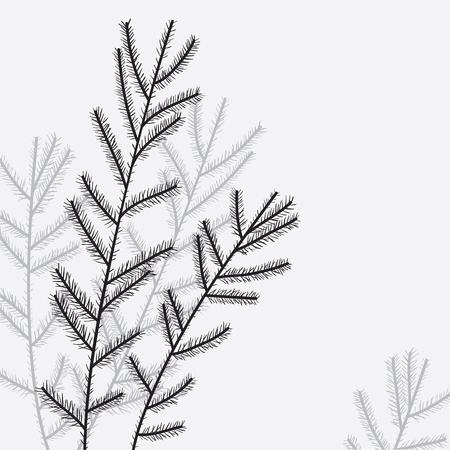 pine needles: Elegant christmas tree branch   Vector illustration