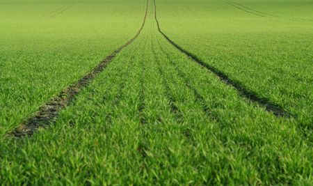 Perfect green farmland with tractor tracks photo