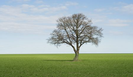 Lonley tree on perfect green field photo