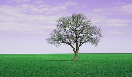 Lonley tree on perfectgreen field and purple fantasy sky photo