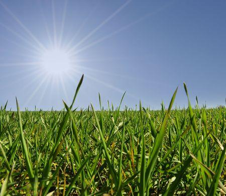 grassfield: Closeup grassfield with bright shining sun