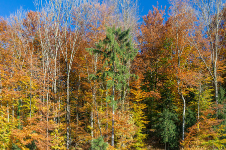 autumn forest: Una foresta colorata autunno