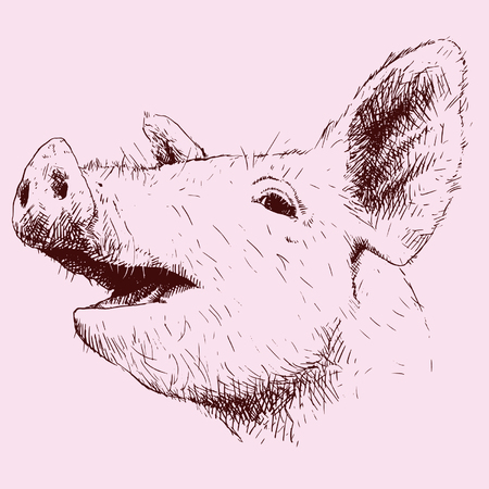 Pig in scratches. 向量圖像