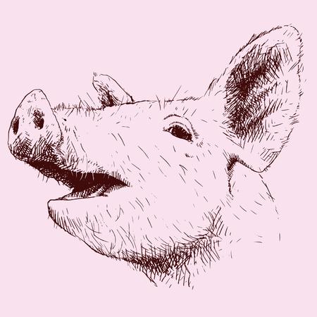 porcine: Pig in scratches. Illustration