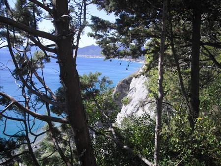 vegetation overlooking the sea