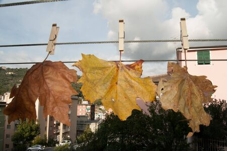 dried chestnut leaves in autumn