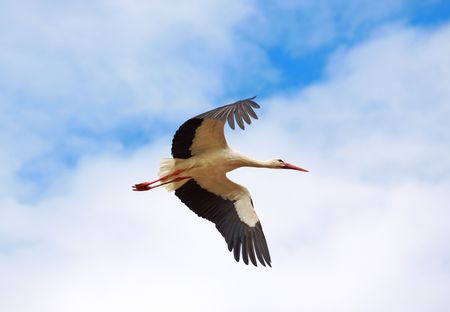 wing span: flying stork Stock Photo