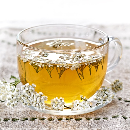 fresh herbal tea Stock Photo - 10744739