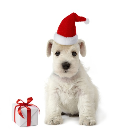puppy and christmas gift photo