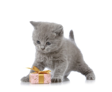 valentine cat: kitten and gift box
