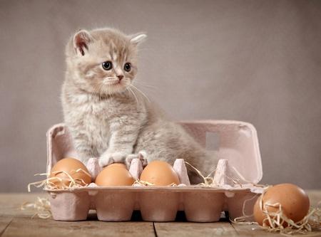 kitten and eggs photo