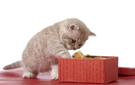 kitten and gift box photo