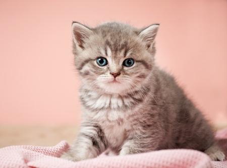 british pussy: little kitten