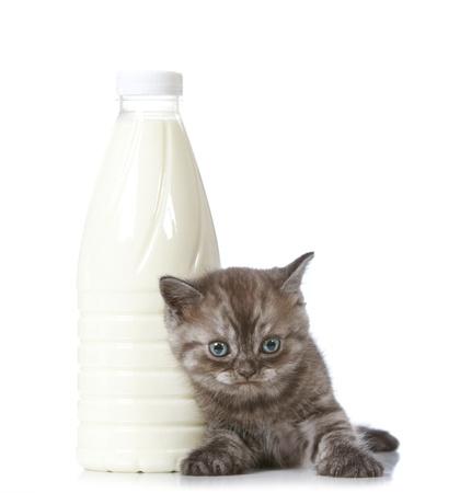 cat eating: kitten and milk bottle Stock Photo