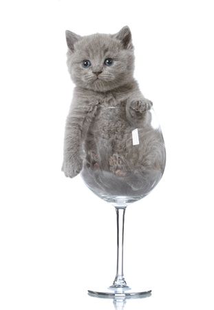 british foods: kitten in a wine glass