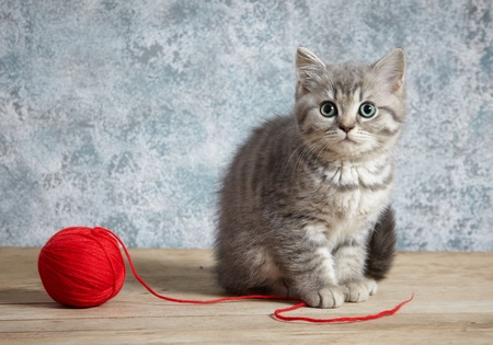 kitten and red thread ball photo