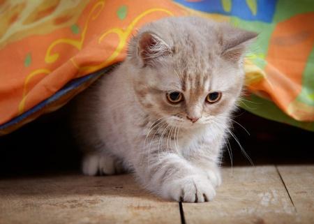 kitten under bed photo