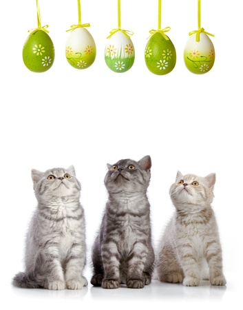 kittens and easter eggs photo