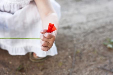 rend: wild poppy in childs hand Stock Photo