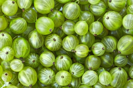 gobble: Gooseberries background