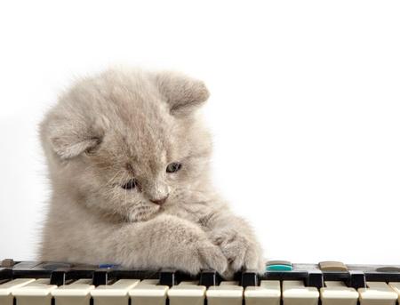 piano: gatito y piano