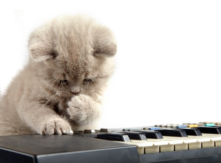 keyboard instrument: kitten and piano Stock Photo