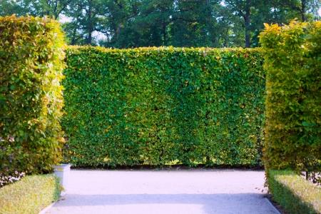 green garden bushes  photo