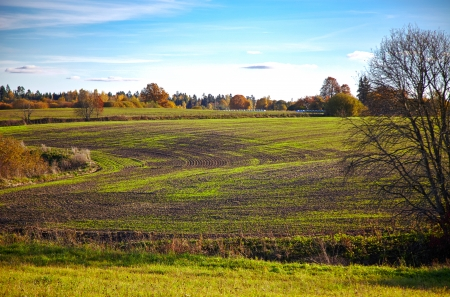 field with young plants in autumn photo