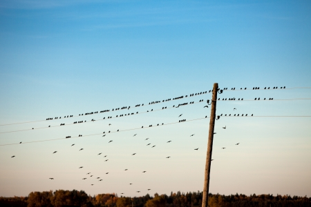 birds sitting on electric wire photo