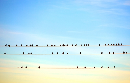 electric wire: birds sitting on electric wire