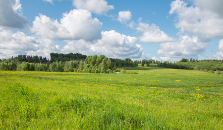 green field: summer landscape with blue sky and green fields