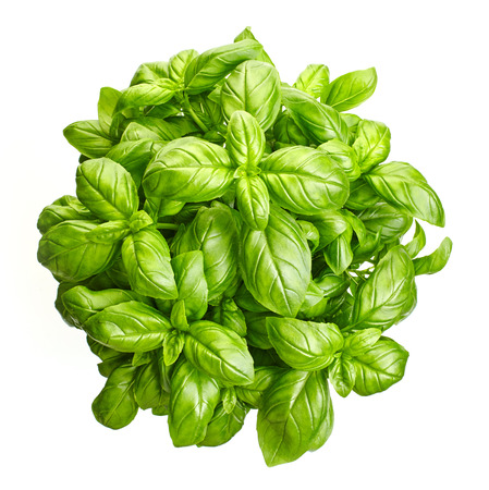 albahaca: frescas hojas de albahaca verde, vista desde arriba