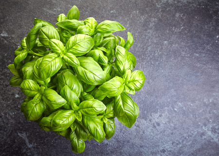 basil: fresh organic basil leaves, top view Stock Photo