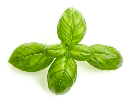 basil: fresh organic basil leaves isolated on white background